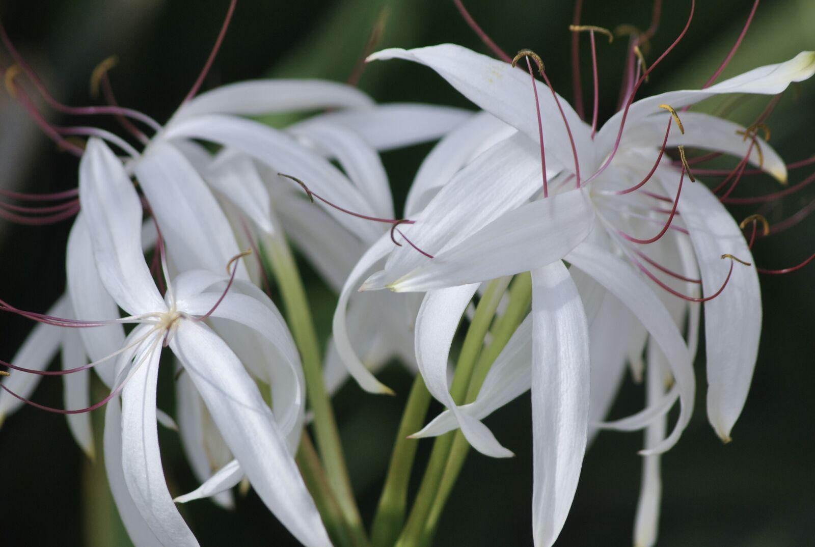 "Nikon D3000 sample photo. ""Beautiful, flowers, flowers, natue"" photography"