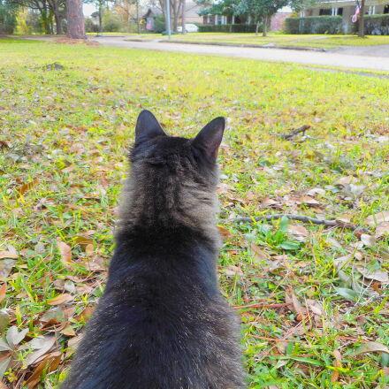 animal, cat, cute, fluffy, Nikon COOLPIX S3700