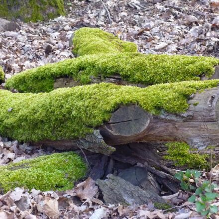 log, moss, bark, Panasonic DMC-FS16