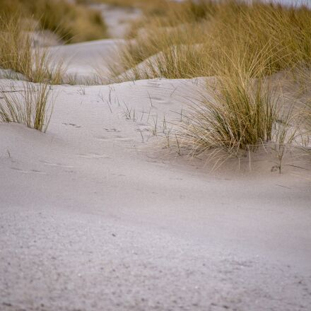 dunes, kijkduin, netherlands, Canon EOS 6D