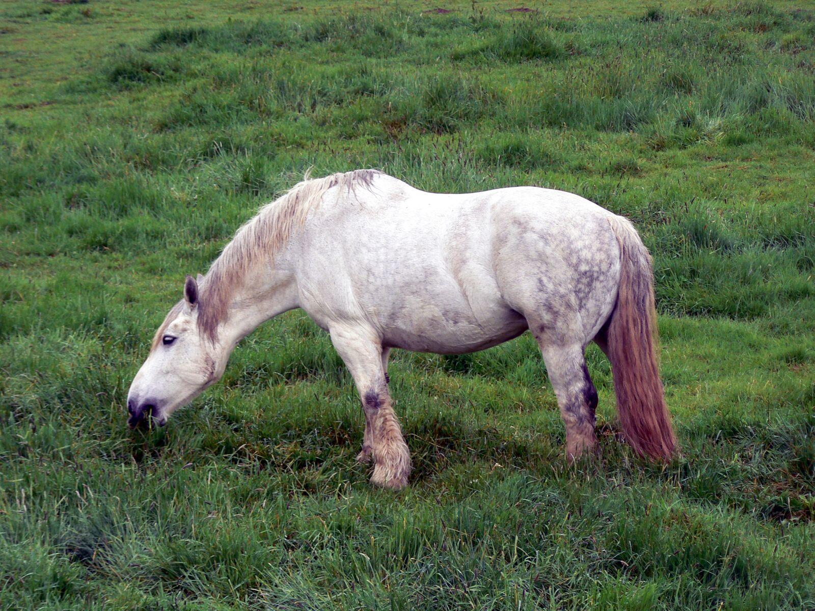 "Panasonic DMC-FZ7 sample photo. ""Horse, green, white"" photography"