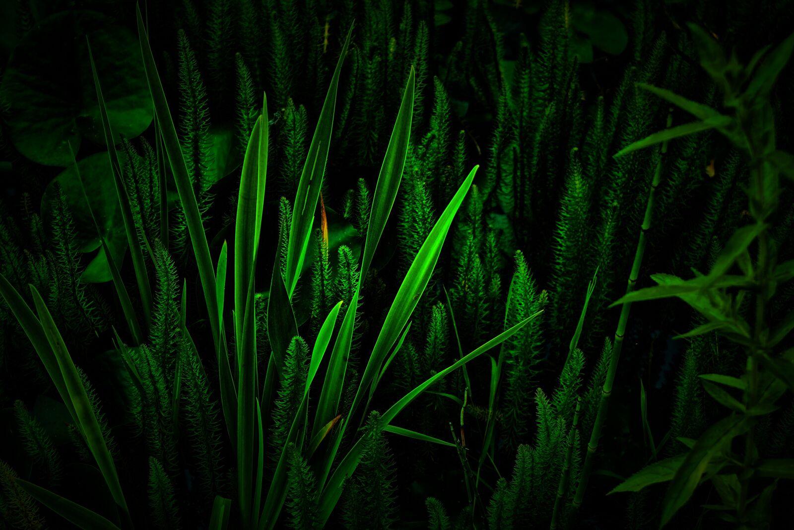 green, grass, nature