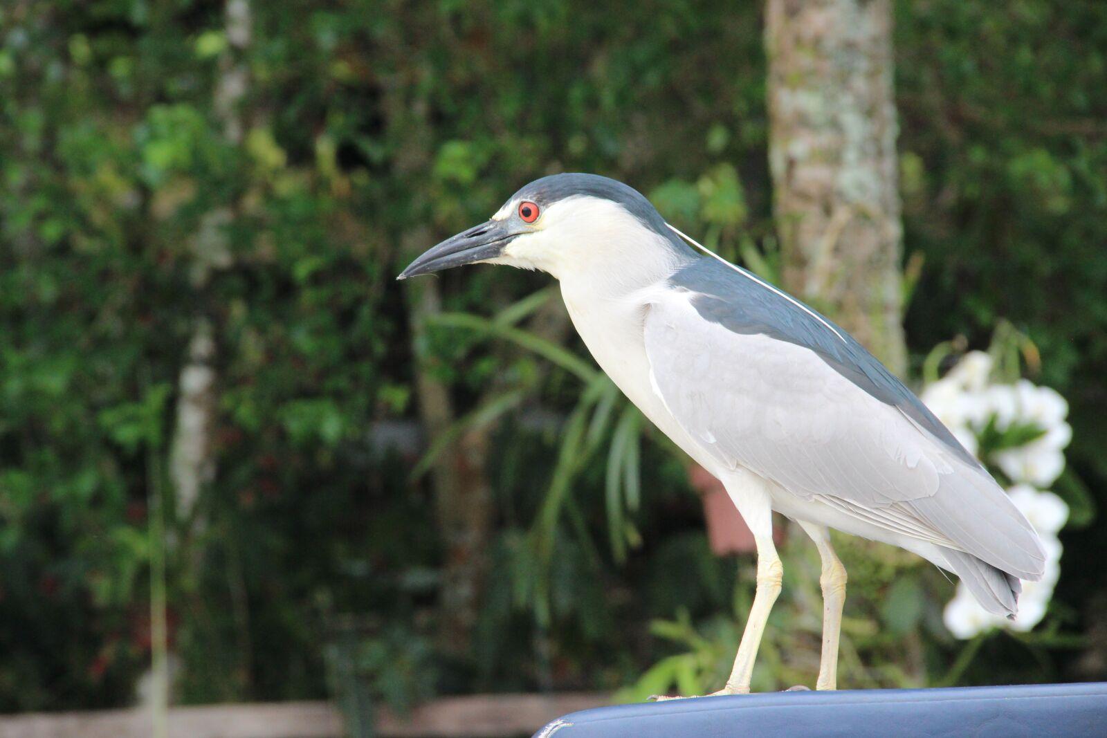 "Canon EOS 600D (Rebel EOS T3i / EOS Kiss X5) sample photo. ""Bird, seagull, flight"" photography"