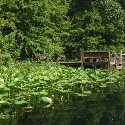 water, trees, structure, Fujifilm FinePix AV100