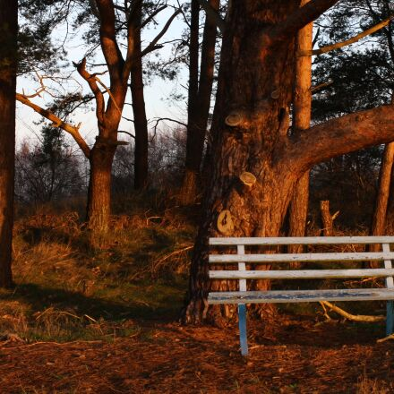 bank, forest, nature, Canon EOS 7D