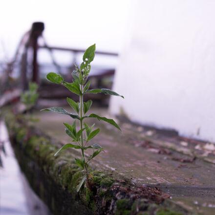 boat, cool, grown, life, Sony SLT-A58