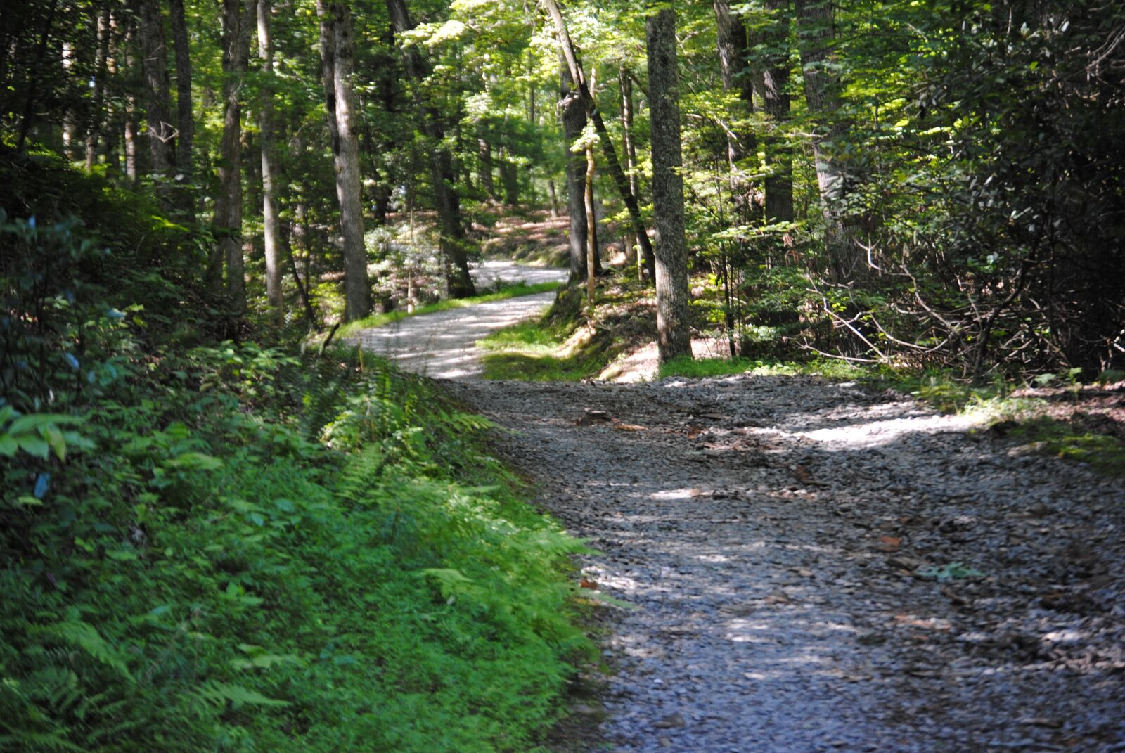 """Nikon D3000 sample photo. """"Trail, road, forest"""" photography"""