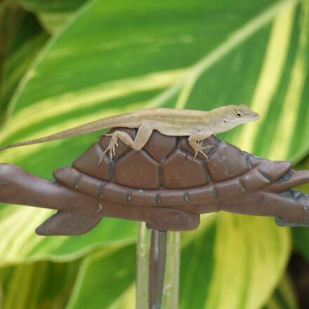 lizard, turtle, animal, Fujifilm FinePix S5200