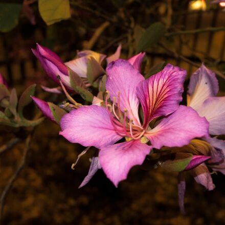 magenta flower, unam nature, Panasonic DMC-GM1