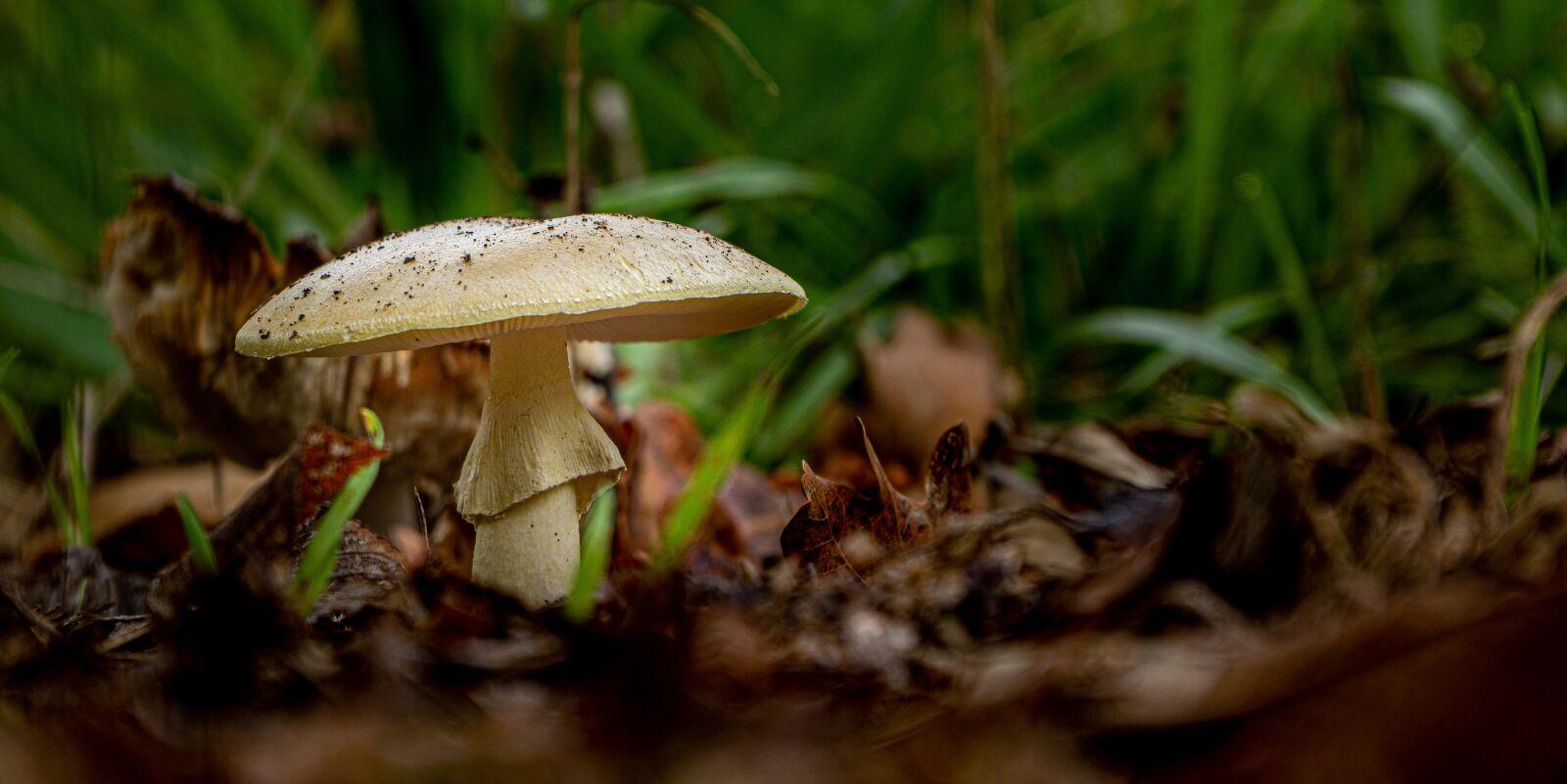 "Sony Alpha NEX-7 sample photo. ""Mushroom, fungi, fungus"" photography"