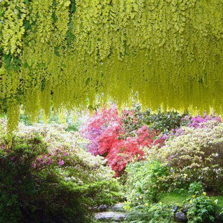 bodnant, gardens, laburnam, Sony DSC-P10