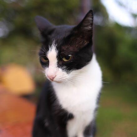 cat, kitten, kitty, Canon EOS 6D