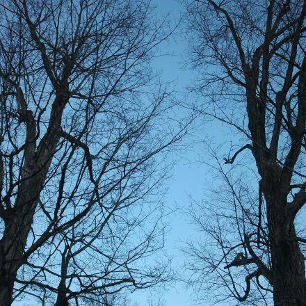 maple, tree, spring, Samsung SGH-I897