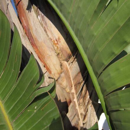environment, tree, nature, palm, Canon POWERSHOT A3200 IS