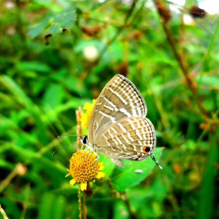 butterfly, insect, nature, Sony DSC-W610