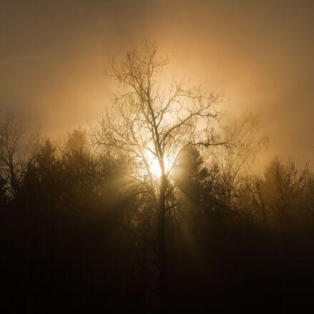 sunset, trees, mist, Canon EOS 7D