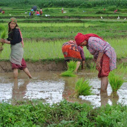 nepal, nepalese, women, Nikon 1 J1