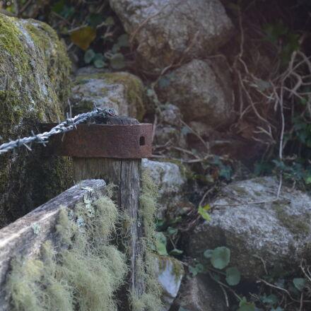 forest, Nikon D5100