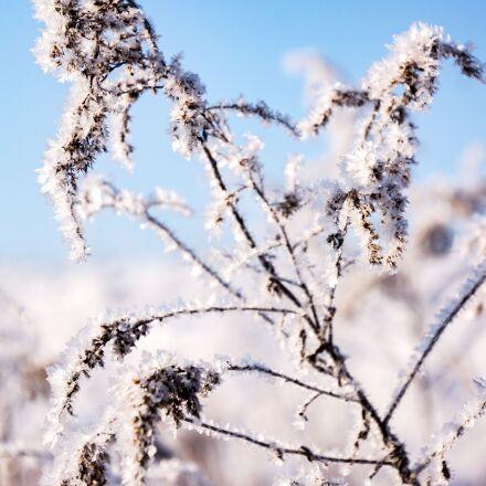 winter, snow, nature, Sony SLT-A77V