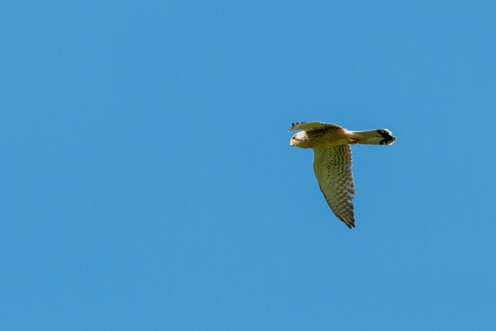 "Canon EOS 70D sample photo. ""Animals, beak, beautiful"" photography"
