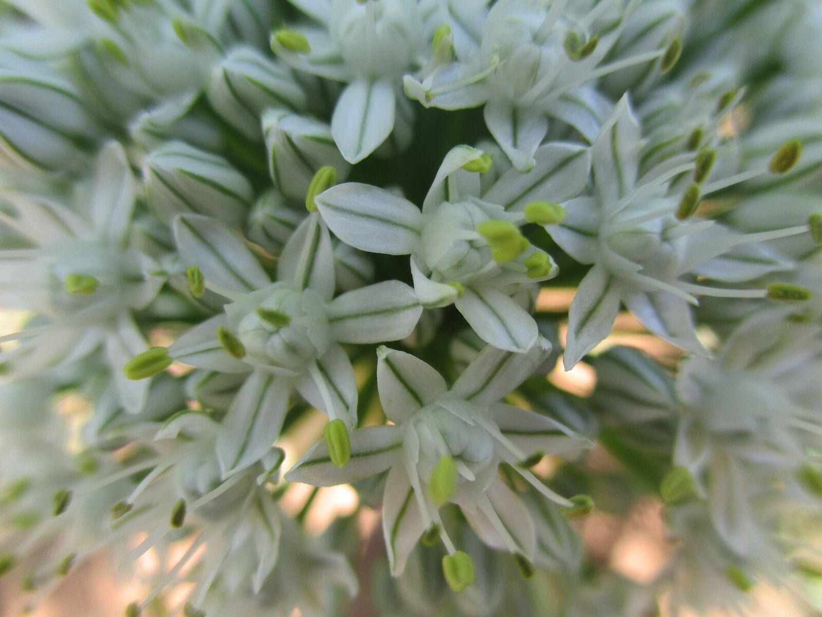 flower, macro, white