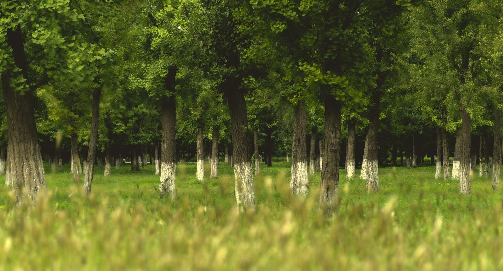 "Sony a6300 sample photo. ""Green, grass, autumn"" photography"
