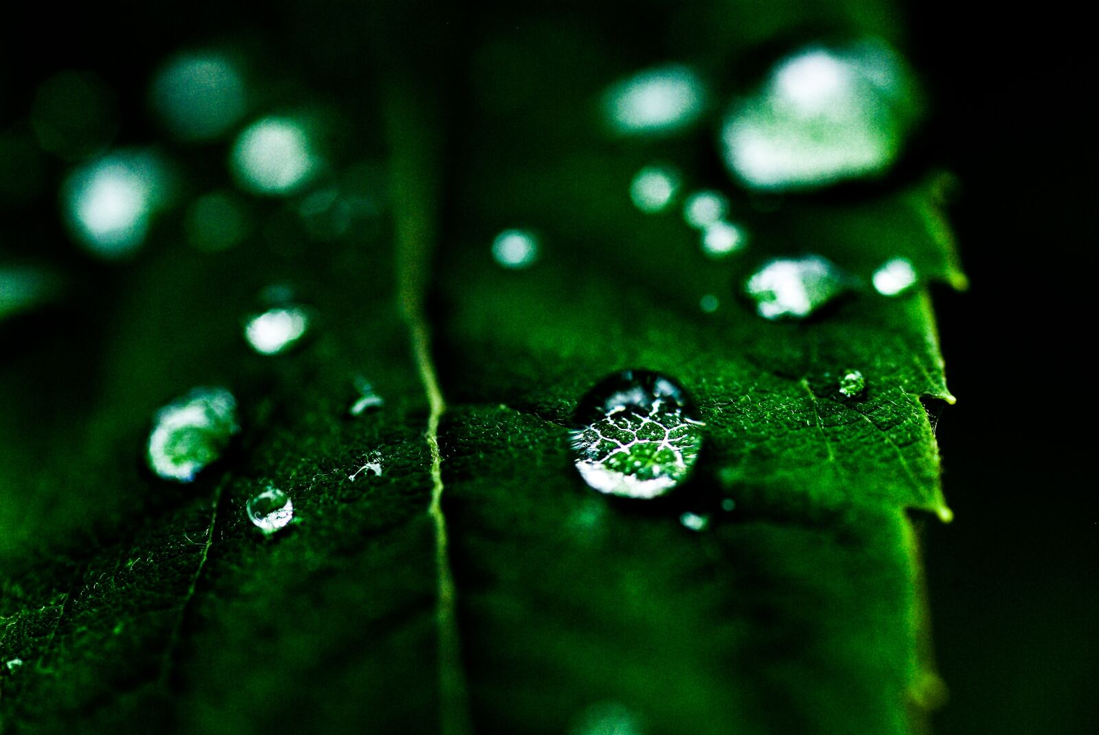 "Pentax K10D sample photo. ""Leaf, drop, green"" photography"