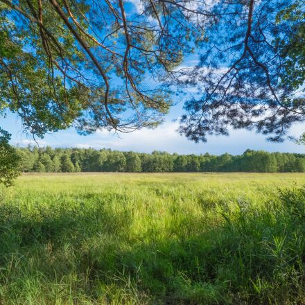 forest, green, landscape, Fujifilm X-T1