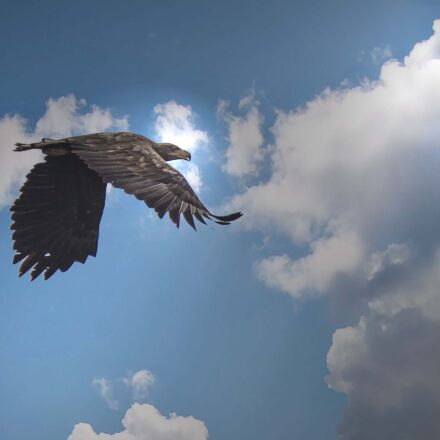 white tailed eagle, kummerower, Canon EOS 60D