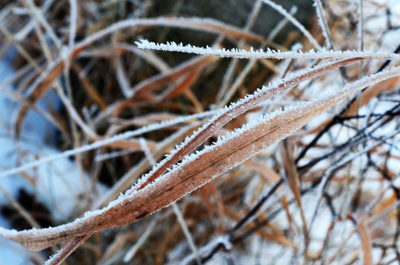 "Nikon D5100 sample photo. ""Cold, frozen, nature, winter"" photography"