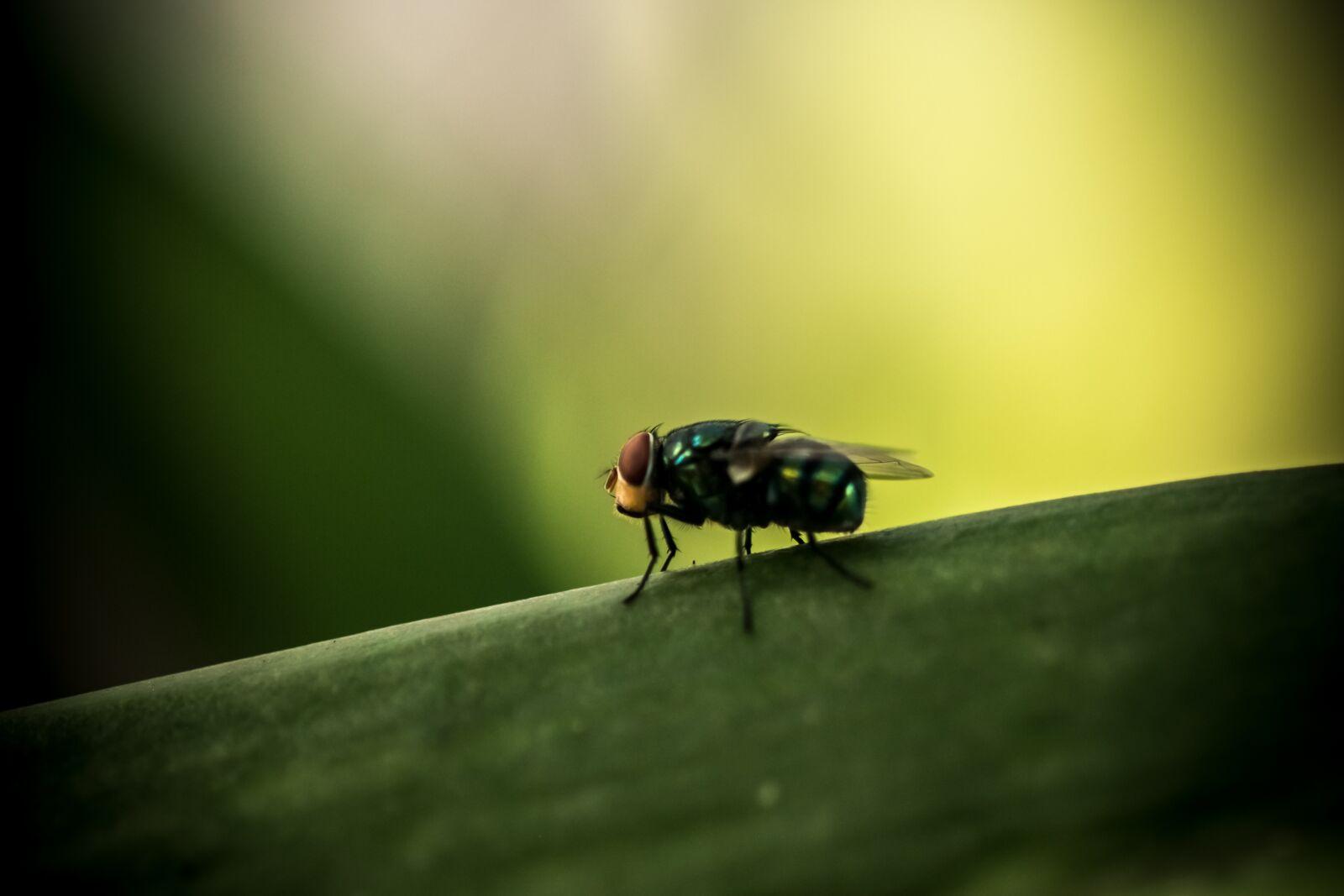 "Fujifilm X-E1 sample photo. ""Animal, nature, wildlife"" photography"