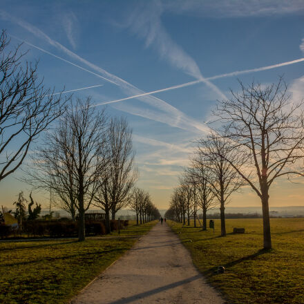 trees, way, Nikon D7100