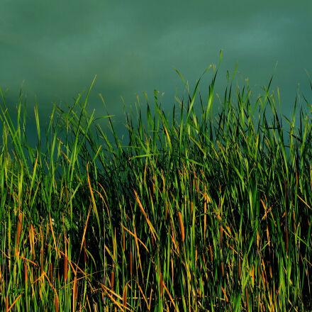 dark, clouds, reeds, Canon EOS 1100D