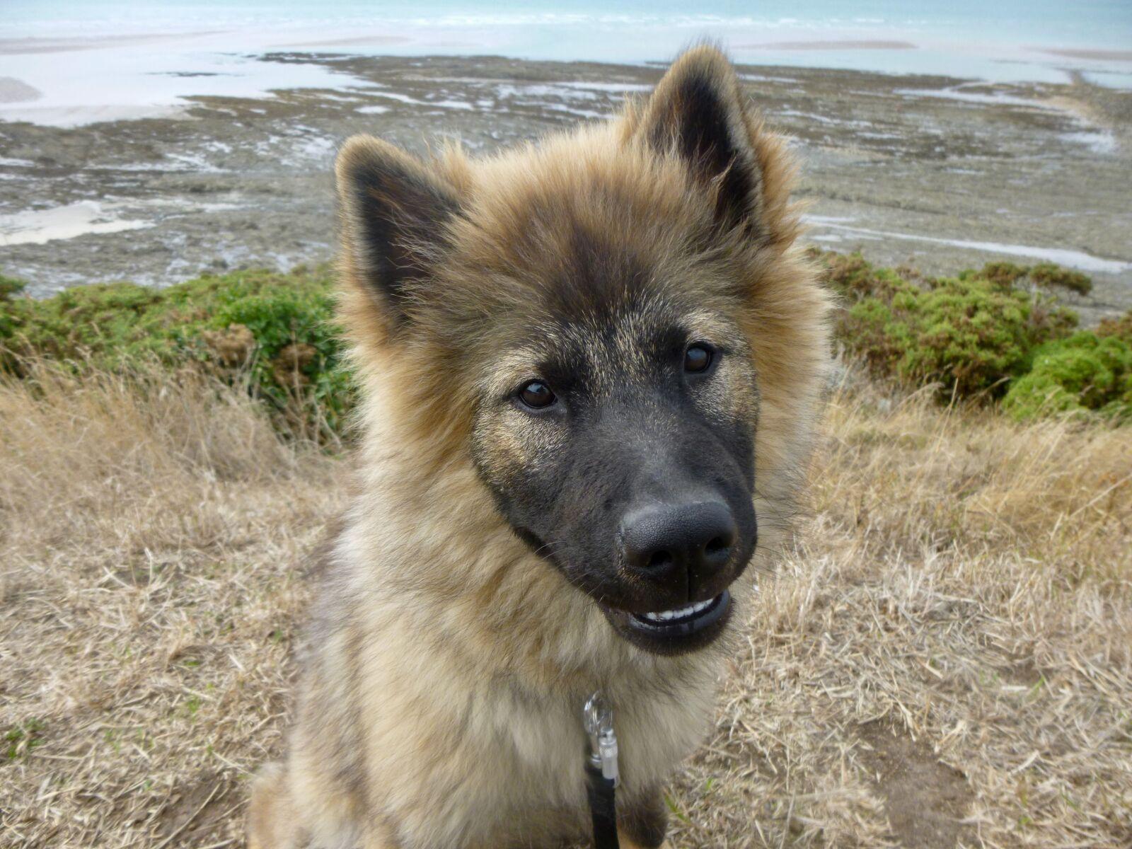 "Panasonic DMC-SZ3 sample photo. ""Dog, dog eurasier, dog"" photography"