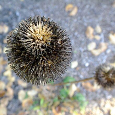 autumn, seeds, pod, Fujifilm FinePix HS25EXR