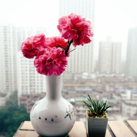 flower, still life, plant, Fujifilm X-T10