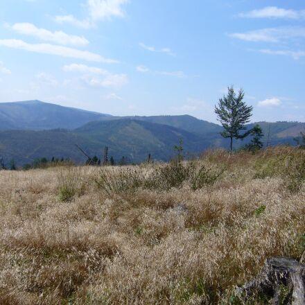 meadow, dry grass, tree, Panasonic DMC-LS2
