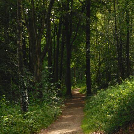 forest, away, nature, Nikon COOLPIX S5200