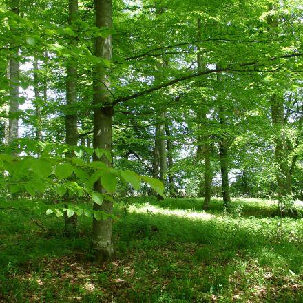 forest, nature park, nature, Sony DSC-V3