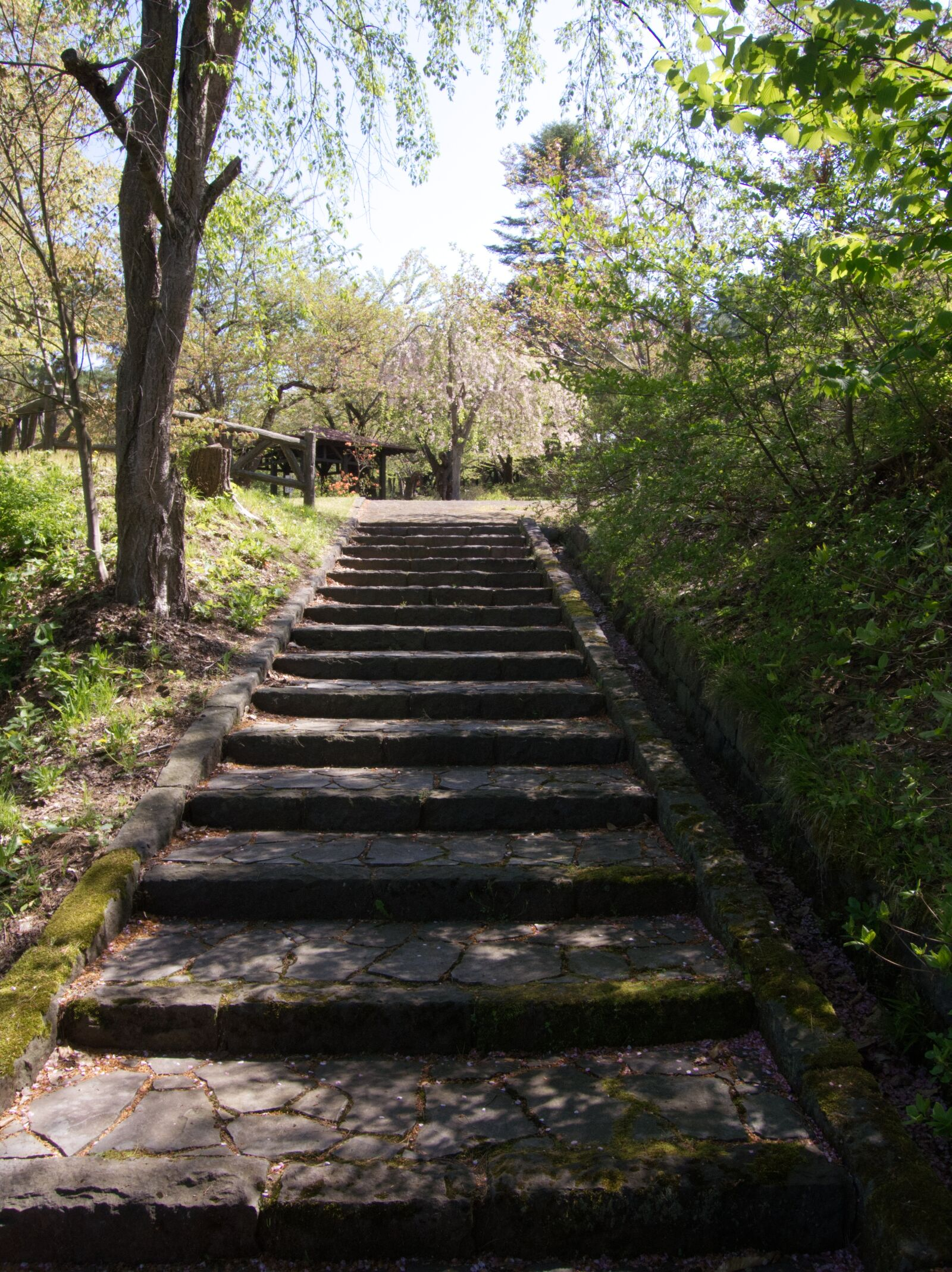 stairs, cherry blossoms, park