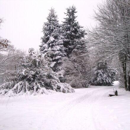 winter, snow, wintry, Sony DSC-W210