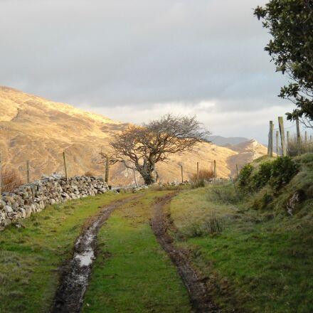 path, landscape, tracks, Nikon COOLPIX L18