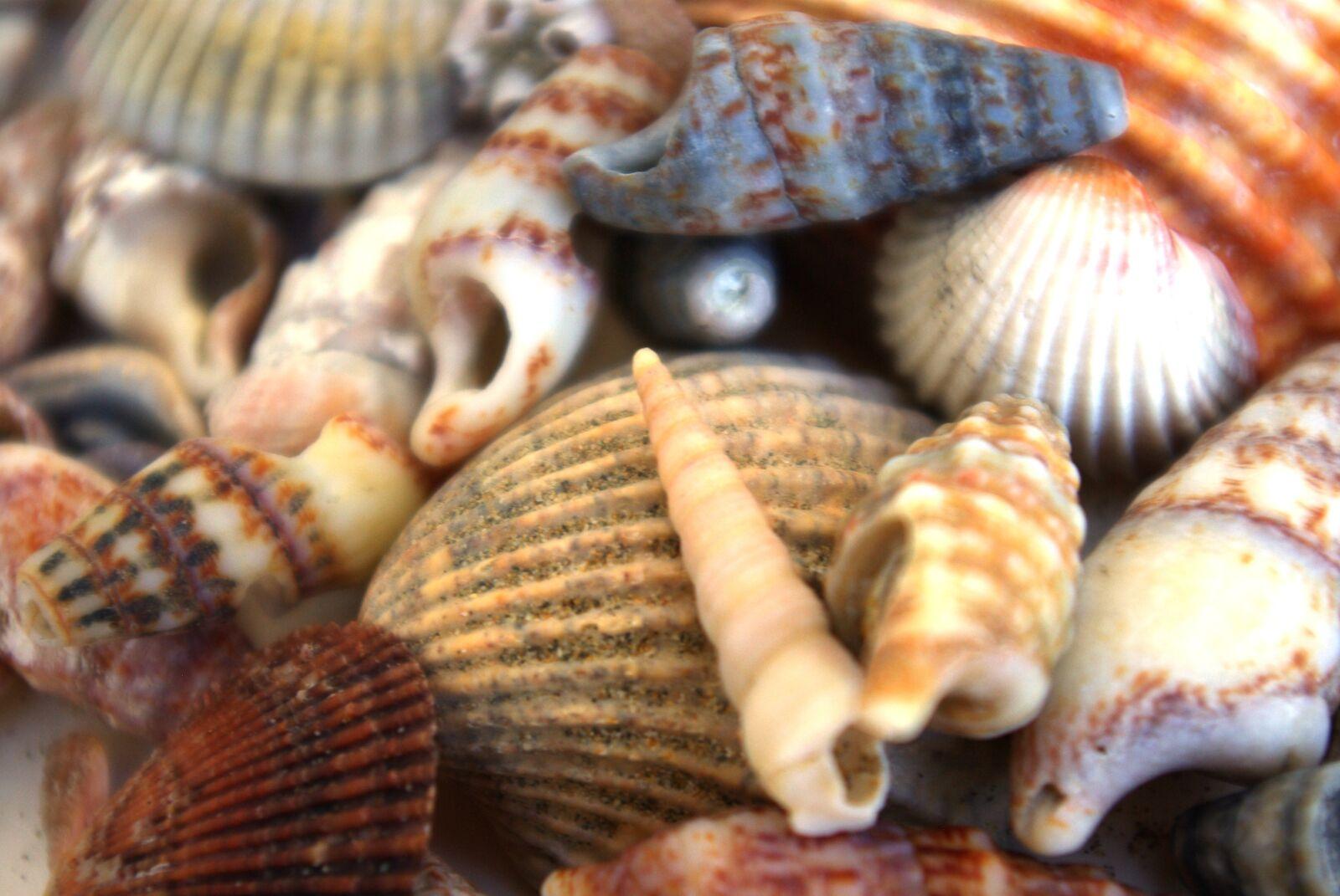 "Pentax K10D sample photo. ""Shells, animals, holiday"" photography"
