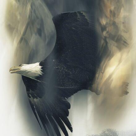 bald eagle, soaring, bird, Canon EOS 5D MARK II