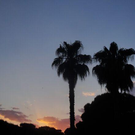 palms, trees, pine, Sony DSC-W270