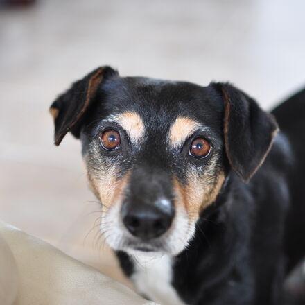 adorable, animal, canine, cute, Nikon D90