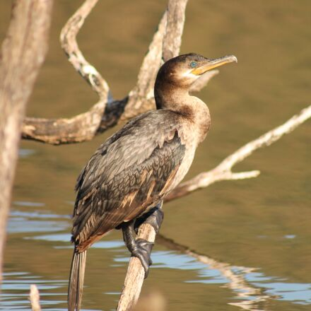 birds, nature, animals, Canon EOS REBEL T3