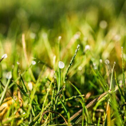 eistropfen, frozen dew drops, Canon EOS 750D
