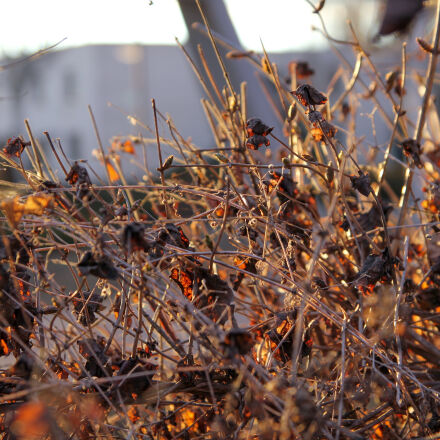 leavs, autumn, forest, leaf, Canon EOS 550D