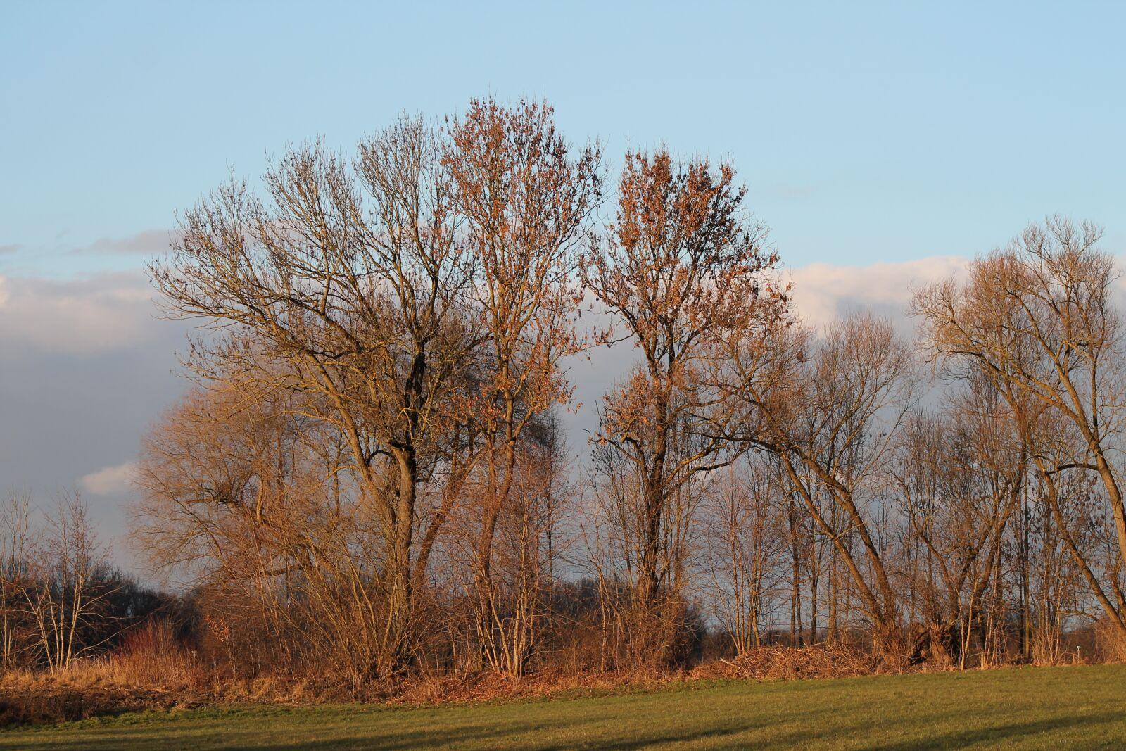 "Canon EOS 1100D (EOS Rebel T3 / EOS Kiss X50) sample photo. ""Trees, idyllic, landscape"" photography"